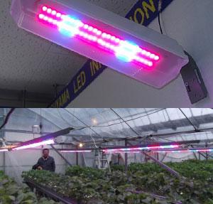 植物栽培用LED照明